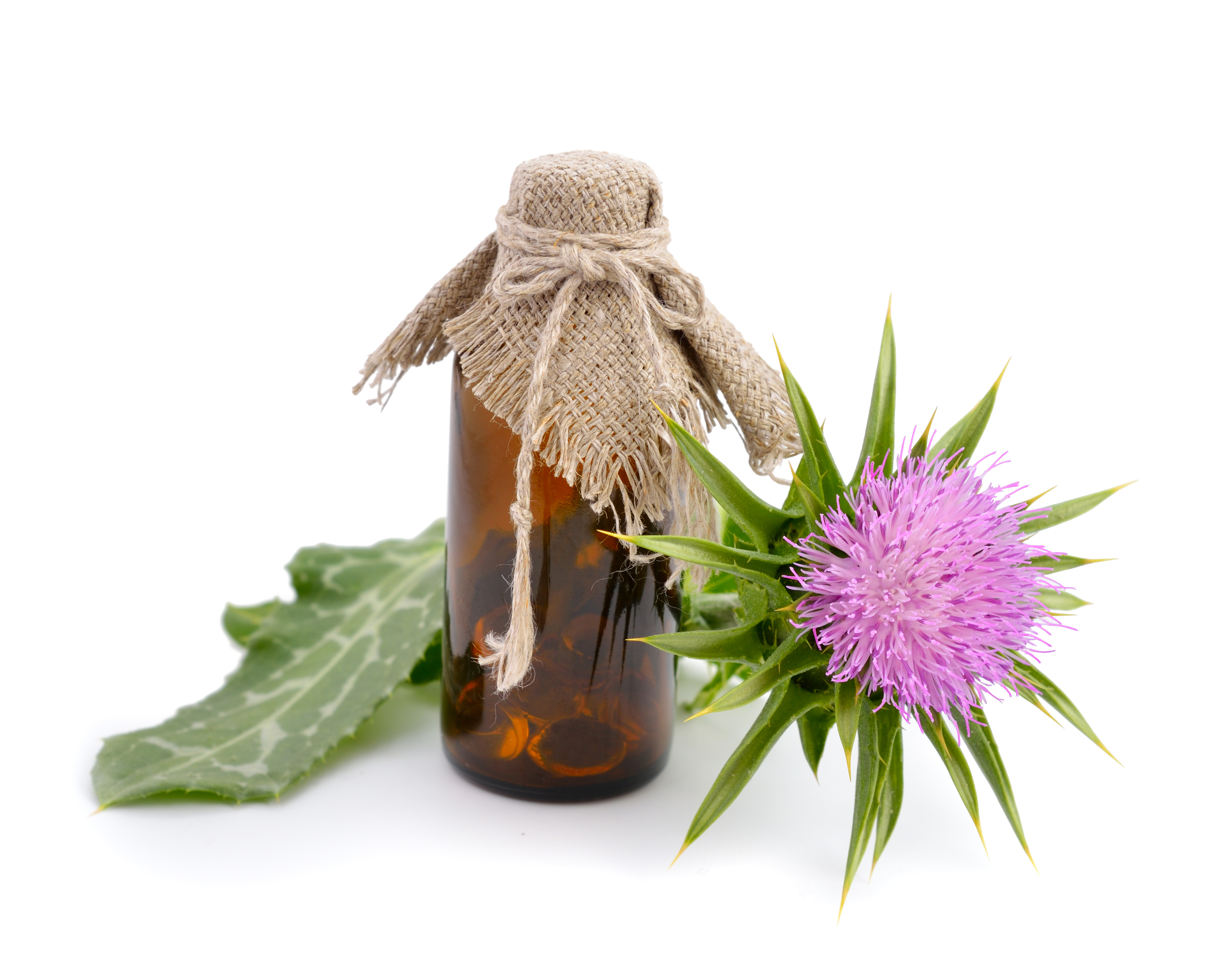 Silibinin from Milk Thistle Extract Halts Colon Cancer Stem Cells