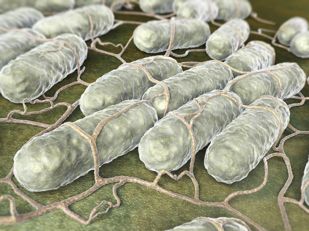 """Nontoxic"" Salmonella Kills Colon Cancer Cells"