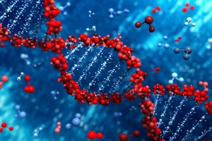 Colon Cancer Linked in Study to Mutations Caused by Imbalance in DNA Building Blocks